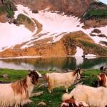 The Majestic Beauty of Hansraj Lake