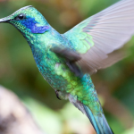 Stunning Photographs of Colorful Hummingbirds