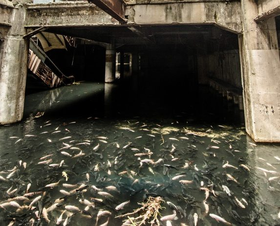An Abandoned Shopping Mall in Bangkok Hides a Fishy Secret