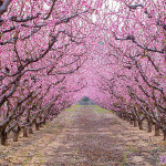 The 27 Magical Paths in the world begging To Be Walked