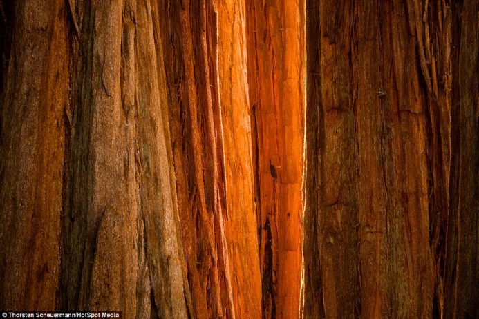 Simply and pure beauty is what Thorsten strives to captures, such as with this shot of a tree in Sequoia National Park, California