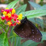 Your Own Butterfly Garden