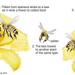 Pollen and Pollination