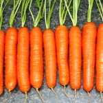 How to Grow Best Flavors & Sweet Carrots