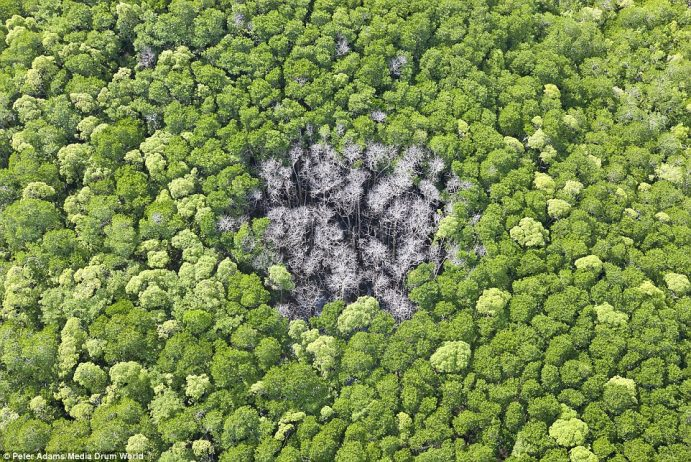 A patch of dead trees shows where a lightning strike hit the forest in Queensland, Australia
