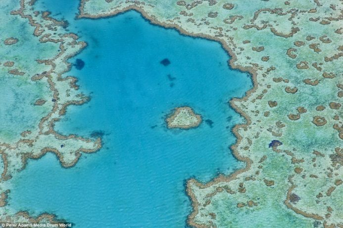 Peter Adams flew his gyrocopter over Australia's Great Barrier Reef in the Pacific Ocean