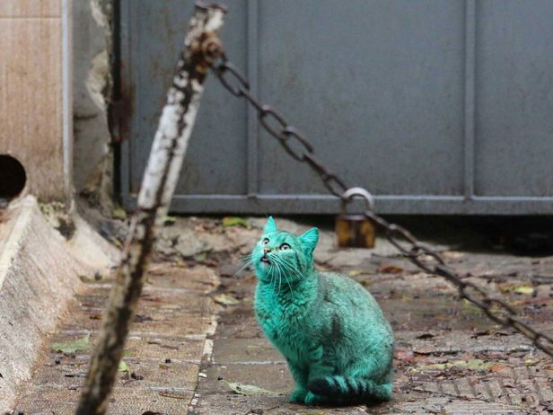 green-cat-varna-bulgaria-4