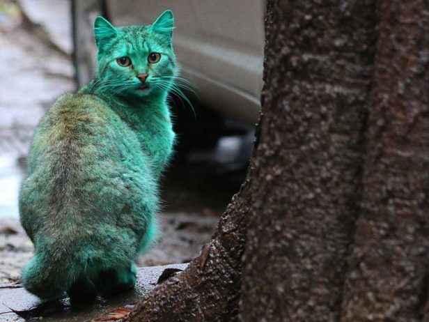 green-cat-varna-bulgaria-6