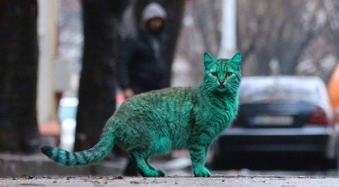 green-cat-varna-bulgaria-8