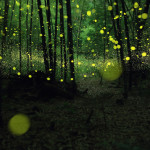 Bioluminescent Forest