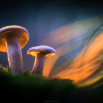 Mesmerizing and Magical Glowing Mushrooms