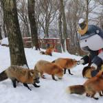 Magical Fox Village in Japan