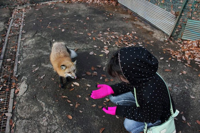 zao-fox-village-japan-6