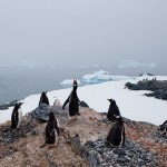 Antarctica May Have Hit Highest Temperature on Record