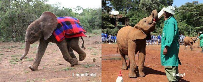 elephantorphans01