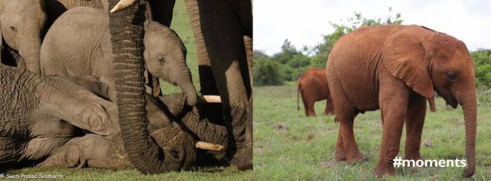elephantorphans07