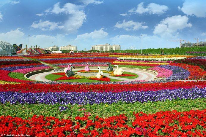 flowers garden. 9 Flowers Garden