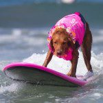 """Ricochet"" A Surf Dog help Disable Peoples provides Inspiration Healing and Hope"