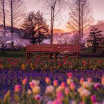 Dazzling Landscapes Reveal the Idyllic Tranquility of Japan