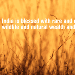 India is Blessed with Unique and Rare Wildlife and Natural Wealth and Beauty