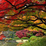 Maple (Acer), Grow Nature's Favorite Tree