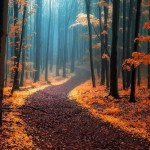 Fascinating Photographs of Autumnal Forests