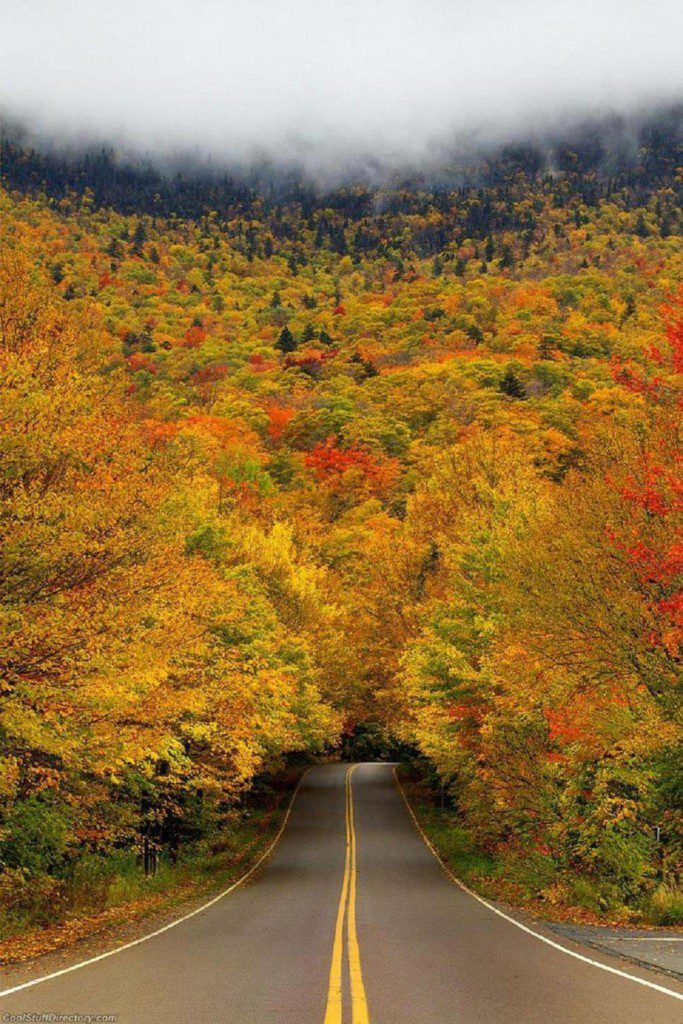 Autumn Tree Tunnel, Smuggler's Notch State Park, Stowe, Vermont, USA