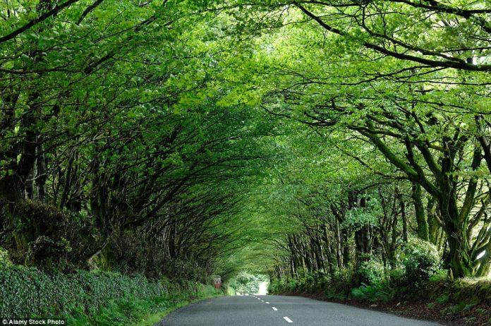 Country road in Milton Abbot, Devon