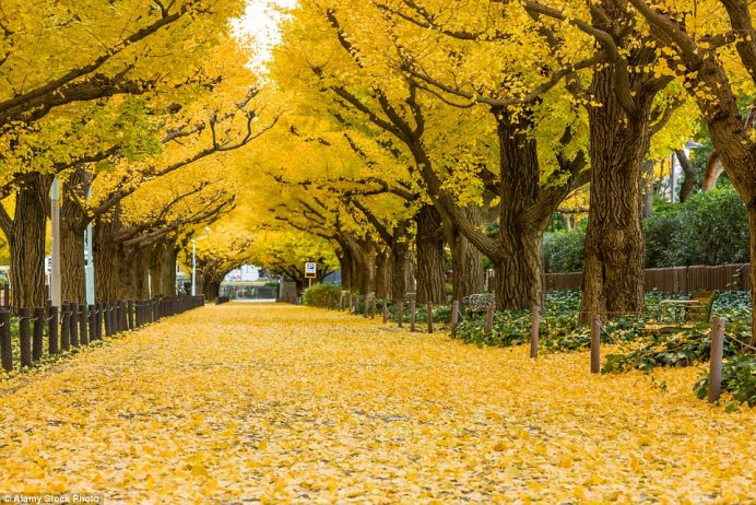 The World S Most Beautiful Tree Tunnels Revealed