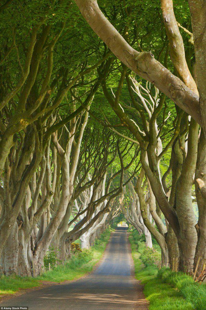 The Dark Hedges in Antrim, Northern Ireland
