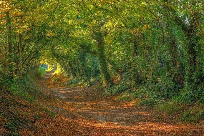 The Path up to the Halnaker Windmill in Sussex, England