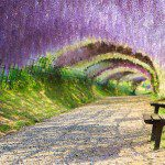 The World's Most Beautiful Tree Tunnels Revealed
