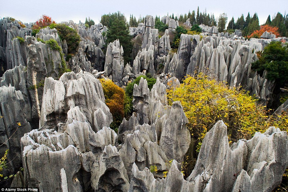 The Stone Forest or Shilin is formed of jagged limestone formations in Shilin Yi Autonomous County, Yunnan Province which feature coloured plants dotted among it