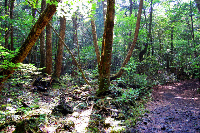 Aokigahara Forest A Perfect Place To Die