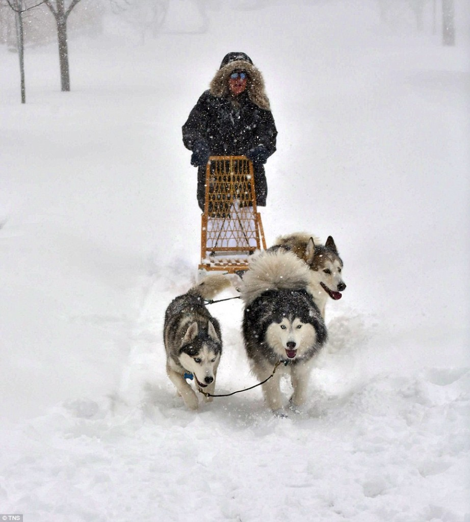 Babs Levedahl takes her huskies, Merlin, left, and Misty May, right, along with a neighbor's Malamut, Ollie, dog sledding in Baltimore on Saturday