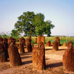 The Mysterious Stone Circles of Gambia