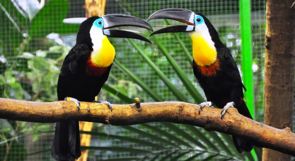 The male and female birds are very active in raising the newborns.