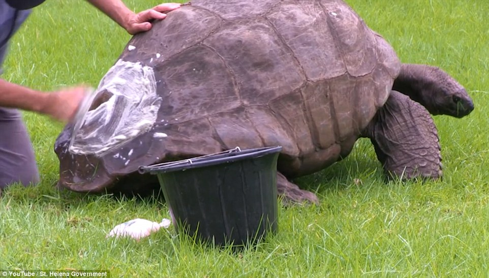 Dr Joe Hollins said that Jonathan stood as still as a statue during the scrub. He's pictured here dealing with the rear of his shell
