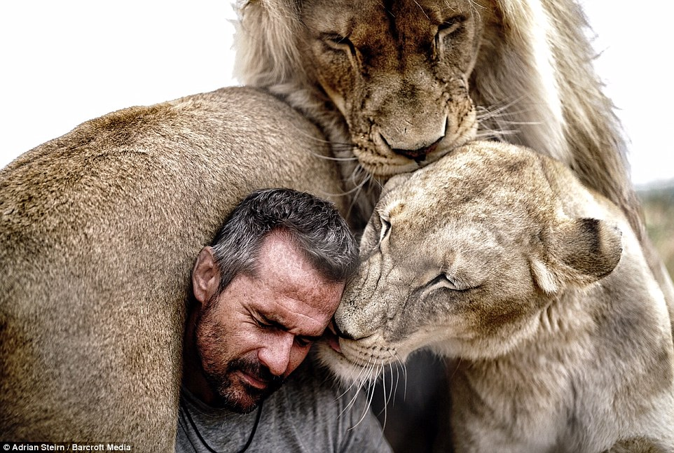 The pride of lions live with world-renowned Lion Whisperer Kevin Richardson at his wildlife sanctuary in Pretoria, South Africa