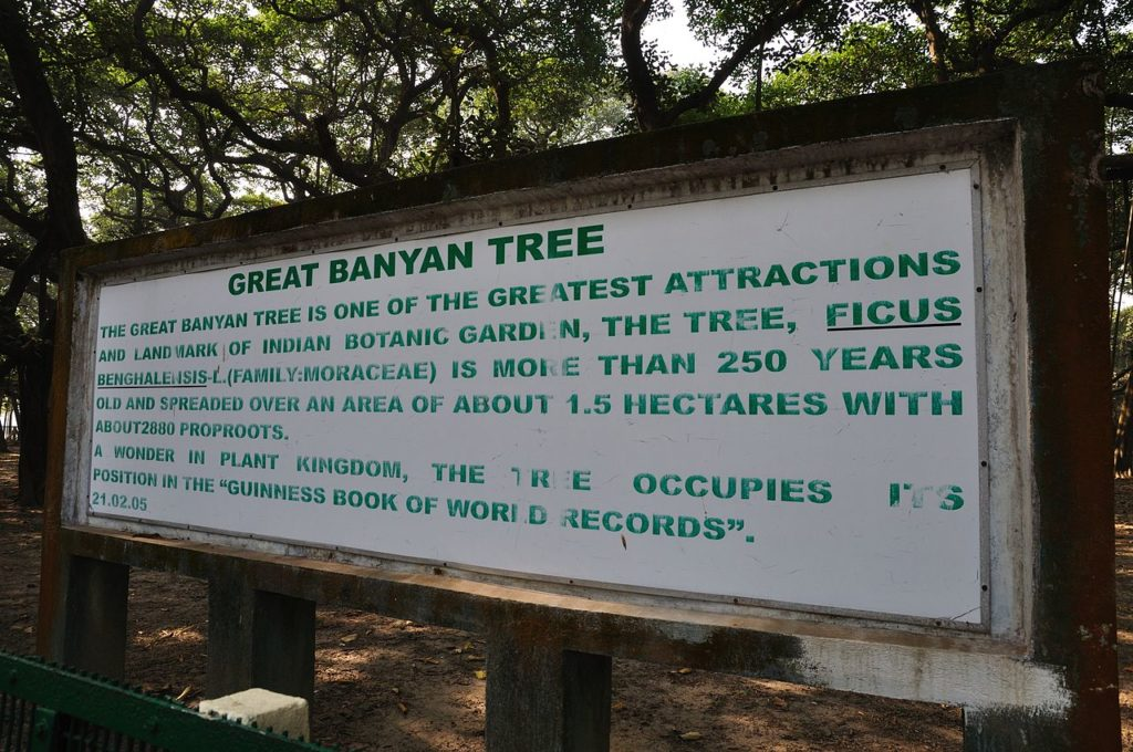 The great banyan tree has drawing ever increasing visitors to the garden then it's collection of exotic plants from five continents.