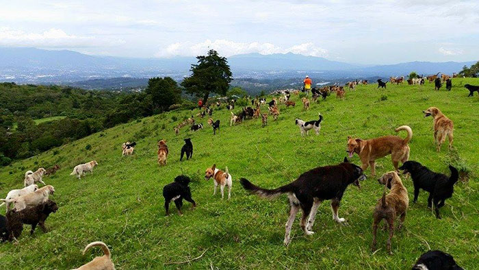 """It is hard to believe, that there's a place on earth, dogs with breed names like """"Chubby-Tailed German Dobernauzer"""" and """"Fire-Tailed Border Cocker"""" roam free across the lush landscape."""