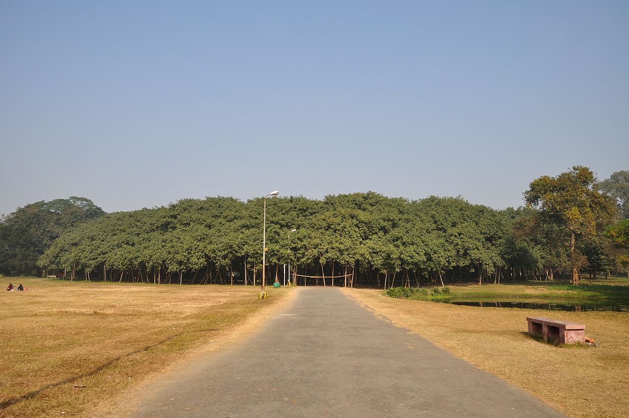 The Great Banyan is a banyan tree; also called Ficus Benghalensis belonging to the family Moraceae, is more than 250 years old tree,