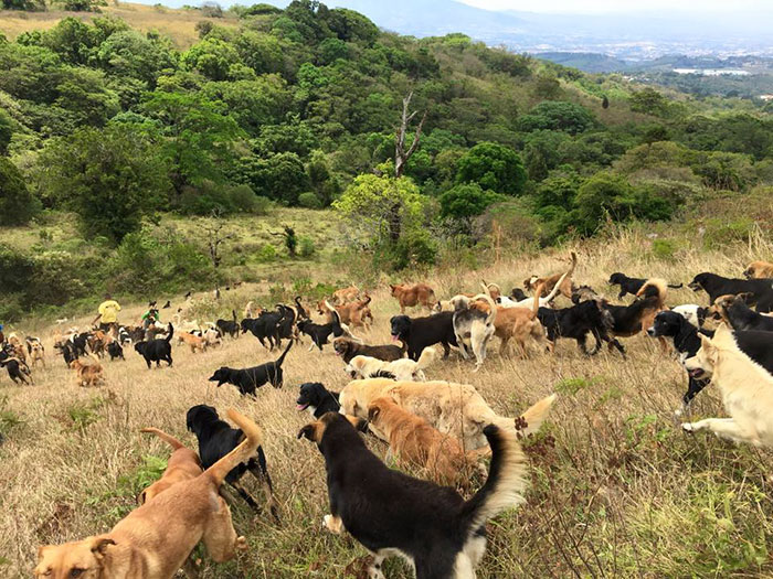 dogs are extremely well cared for and happy and it's hard not to fall in love while hiking with these dazzling, friendly pups through their free-range heaven.