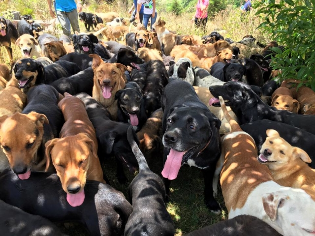 it is privately funded, volunteer run, no kill animal's shelter in Costa Rica. When you visit the Land of the Strays there is no pressure to adopt,