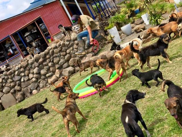 """The dogs of """"Territorio de Zaguates"""" spend most of their time basking in the sun and relishing the cool Costa Rican breezes, but they also have access to a modern indoor facility."""