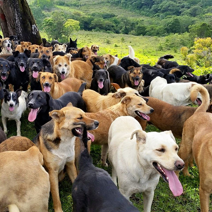 Each dog for example is given its own exclusive breed, so in its place of being nondescript mutts, the animals become interestingly named rarities.