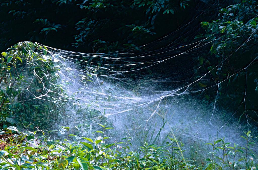 Net of Social Spiders