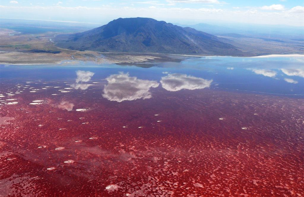 The alkali salt crust on the surface of the lake is also every so often colored red or pink by the salt-loving microorganisms that live they're.