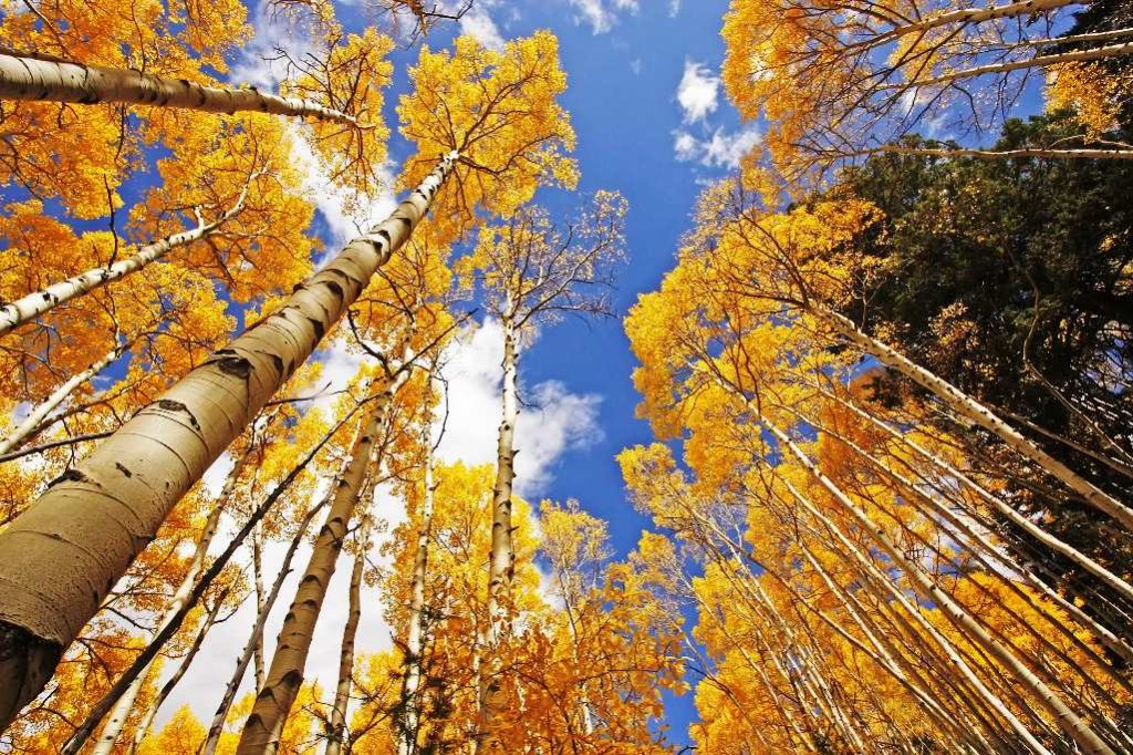 Pando is massive organism and its age is more than one millions years old, could be easily called world's oldest living organisms.