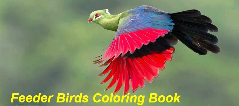 Feeder Bird Coloring Book